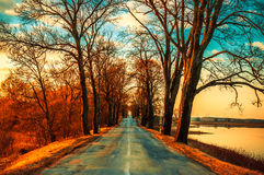 Asphalt road and tree tunnel Royalty Free Stock Photos