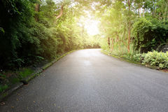 Asphalt road with trees Royalty Free Stock Photo