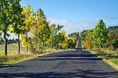 Asphalt road among trees with leaves in autumn colors. Number of trees casting shadows on the series of asphalt road surface, azure sky with clouds Royalty Free Stock Image