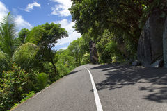 Asphalt road in tropical forest. Royalty Free Stock Image