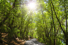 Asphalt road in tropical forest. Stock Photos