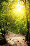 Asphalt road in tropical forest. Royalty Free Stock Photos