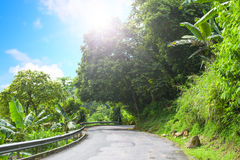 Asphalt road in tropical forest. Stock Image