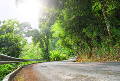 Asphalt road in tropical forest. Stock Photography