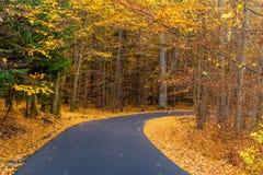 Asphalt Road In Voderady Beechwood, Czechia stockbilder