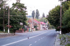 Asphalt road with white markings on city street Royalty Free Stock Photos
