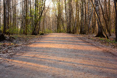 Asphalt road in a wooded area Royalty Free Stock Photos