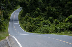 Asphalt s road in forest Stock Photo