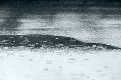 Raindrops rippling in water puddle on asphalt sidewalk during th Stock Photography