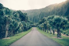 Asphalt tropical road with palm and mountains in Hawaii Ho'omaluhia botanical garden. royalty free stock photo