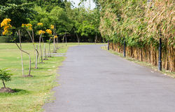 Asphalt walkway with the golden bamboo row Royalty Free Stock Image