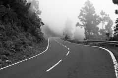 Asphalt way in forest. Road curve Stock Photos