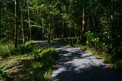 Asphalt way meandering through shady woods in sunny summer after Stock Photography