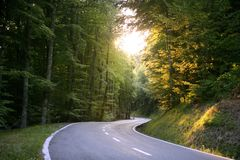 Asphalt winding curve road in a beech forest Royalty Free Stock Photo