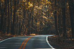 Asphalt Winding Road in the Woods Royalty Free Stock Photos