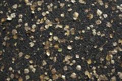 Asphalte humide avec les feuilles brunâtres Chute, automne Photos stock