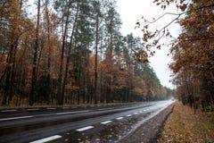 Asphalte rouan dans la forêt d'automne Image libre de droits