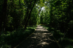 Asphalted path in shady woods of sunny summer Royalty Free Stock Photography