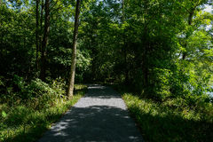 Asphalted path in shady woods on sunny summer day Royalty Free Stock Photography