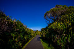 Asphalted pathway through temperate rainforest with trees in south island, in New Zealand.  Royalty Free Stock Images