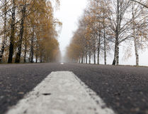 Asphalted road, autumn Stock Photography