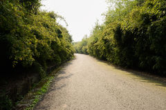 Asphalted road in bamboo of sunny spring Stock Photos