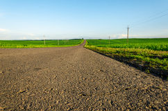 The asphalted road in a green field lit with a sunlight. The asphalting road in a green field with power lines lit with a sunlight Stock Photography