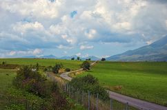 Asphalted road leading up to the mountains in forest. A herd of cows grazes a meadow. Summer time in Slovakia. royalty free stock photo