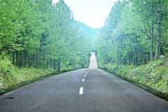 Asphalted road (spring) Royalty Free Stock Images