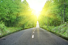 Asphalted road (spring) Stock Photo