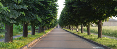 Asphalted road with tree-lined street Stock Photo