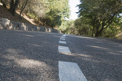 The asphalted road through the wood Royalty Free Stock Image