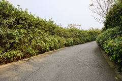 Asphalted way in trees and shrubs on sunny spring day Stock Photos