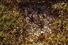 Asphaltez la texture Image libre de droits
