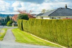 Asphaltieren Sie passway und grüne Hecke entlang Hinterhof des Wohnhauses lizenzfreie stockbilder