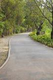Asphaltieren Sie Weise in der Parkperspektive zum Hintergrund Stockfotos