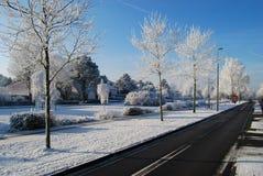 Asphaltstraße, Bäume schneien und blauer Himmel Lizenzfreies Stockfoto