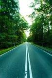 Asphaltstraße durch den grünen Wald Stockbild