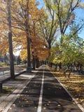 Asphaltstraße im schönen goldenen Buchenwald während des autum lizenzfreie stockbilder