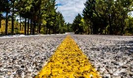 Asphaltstraße mit den gelben Markierungen, die in den Wald überschreiten Stockfoto