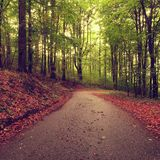 Asphaltweg, der unter den Buchenbäumen am nahen Herbstwald umgeben durch Nebel führt Regnerischer Tag Stockfotografie