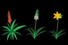 Asphodelaceae flowers set Stock Photography