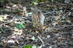 Aspiraciones lindas del conejo alrededor del bosque fotos de archivo libres de regalías