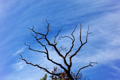 Aspiration to cleanliness. The tree branch is directed in the sky to clouds, the pure blue sky Royalty Free Stock Photo
