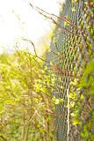 Aspiration to freedom. Plants through an iron fence reach for light Royalty Free Stock Photo