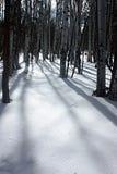 Aspskuggor i snön Royaltyfria Bilder