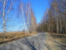 Asrhaltweg in de berken Royalty-vrije Stock Foto