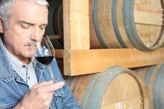 Assaggio di vino dell'uomo nella cantina Immagini Stock Libere da Diritti