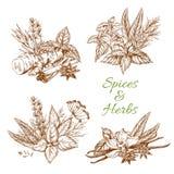Assaisonnements de croquis de vecteur d'épices ou d'herbes illustration libre de droits