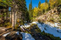 Assaisonnez la neige et les arbres changeants et premiers d'automne Image stock